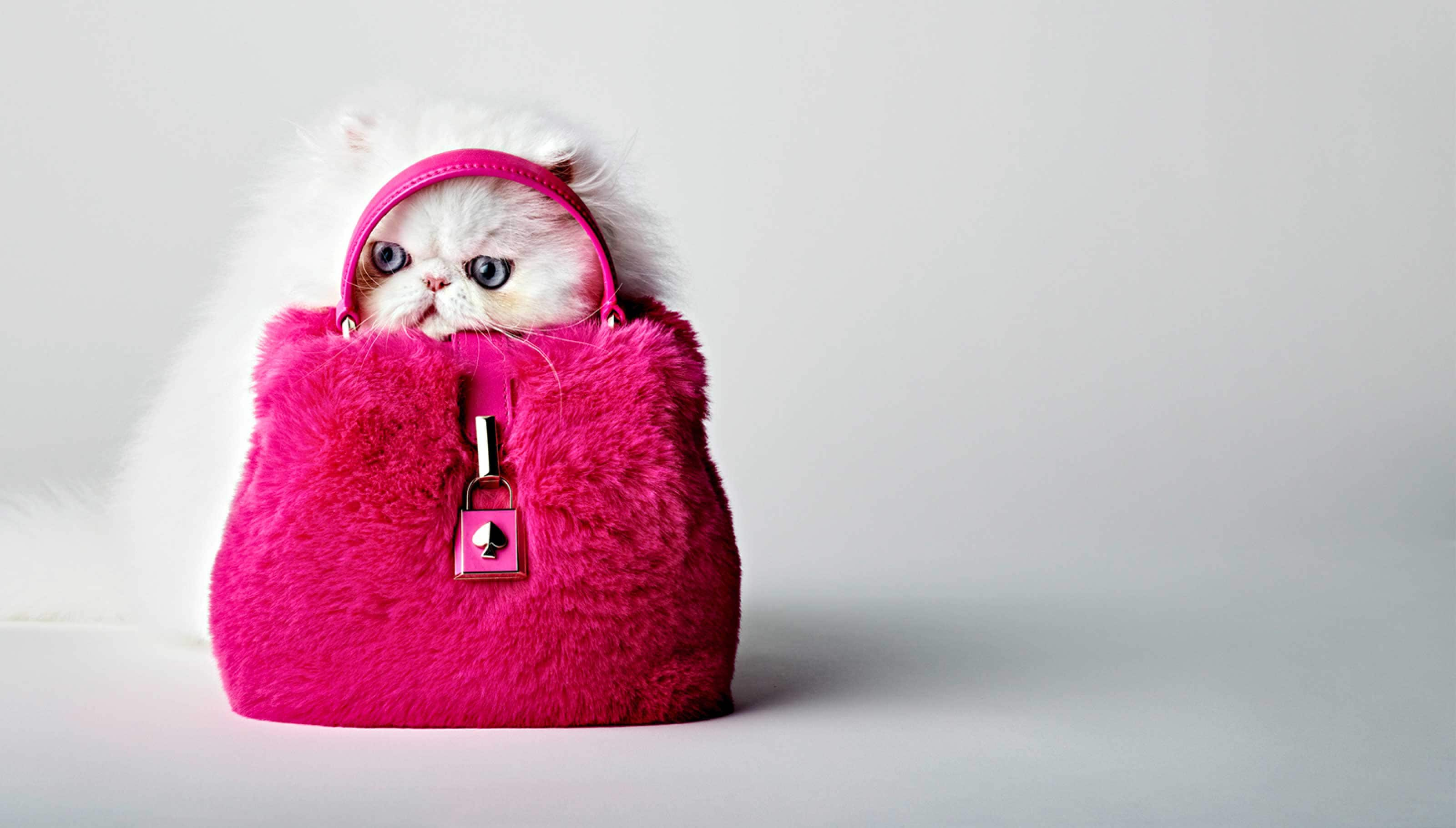 cat with remedy handbag